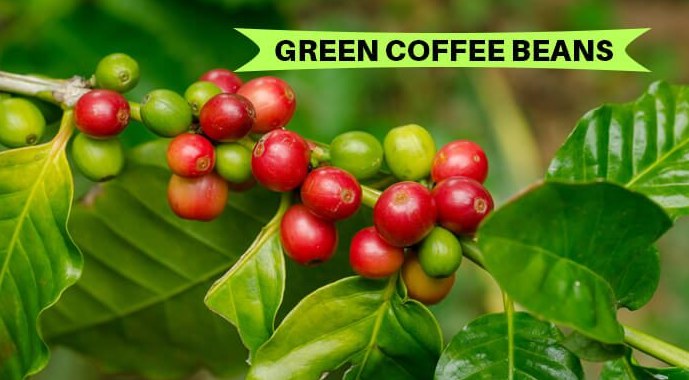 Benefits Of Green Coffee Beans For Your Skin Hair And Body Make